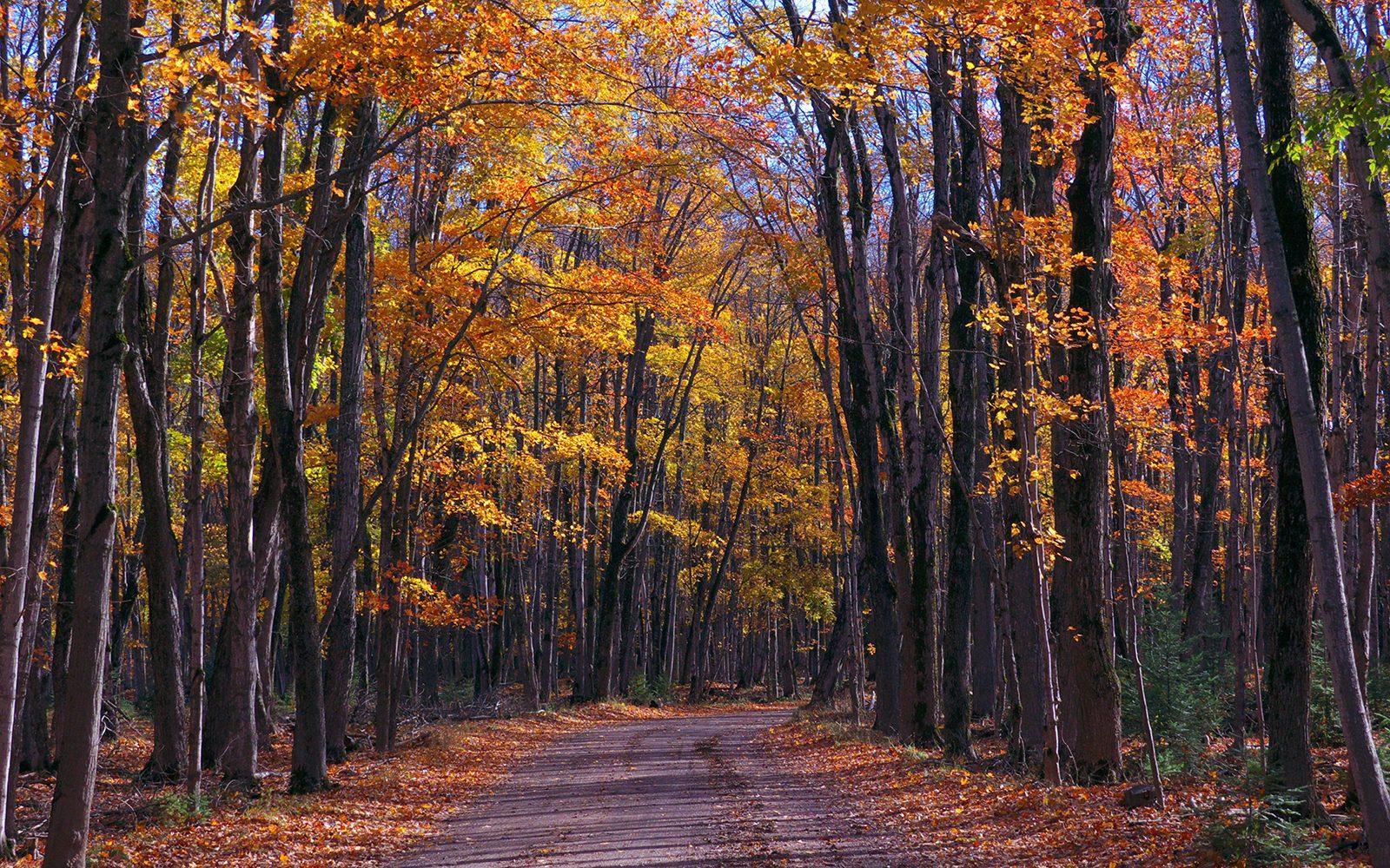 Bois-Blanc-Fall-leaves-1600x1000